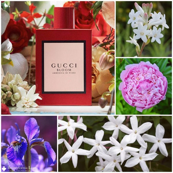 Gucci Bloom Ambrosia di Fiori EDP Intense NEW 100ml ( Bloom đỏ )